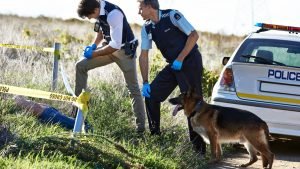 Training for K9 Police and Dogs