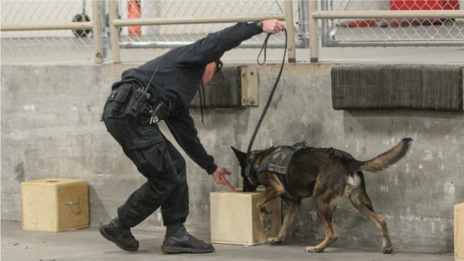 Working K9 Police Dog on Building Searches
